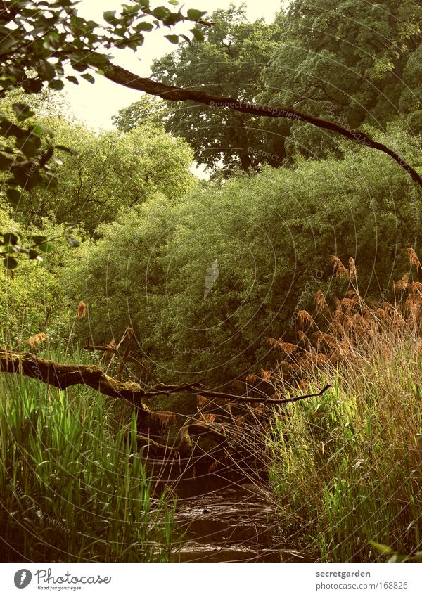 Water Green Tree Plant Summer Vacation & Travel Loneliness Forest Relaxation Freedom Environment Grass Spring Park Trip Large