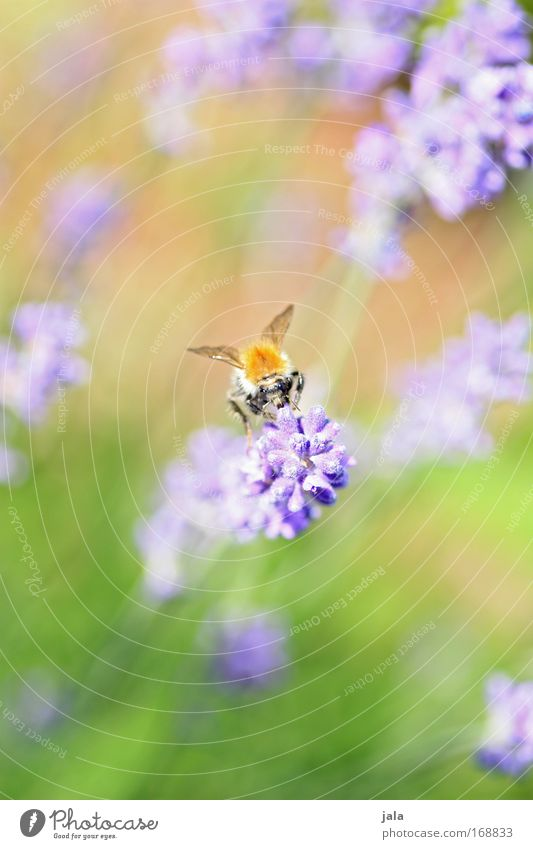Nature Flower Green Plant Animal Yellow Meadow Blossom Park Flying Violet Wing Bee Wild animal Fragrance Beautiful weather