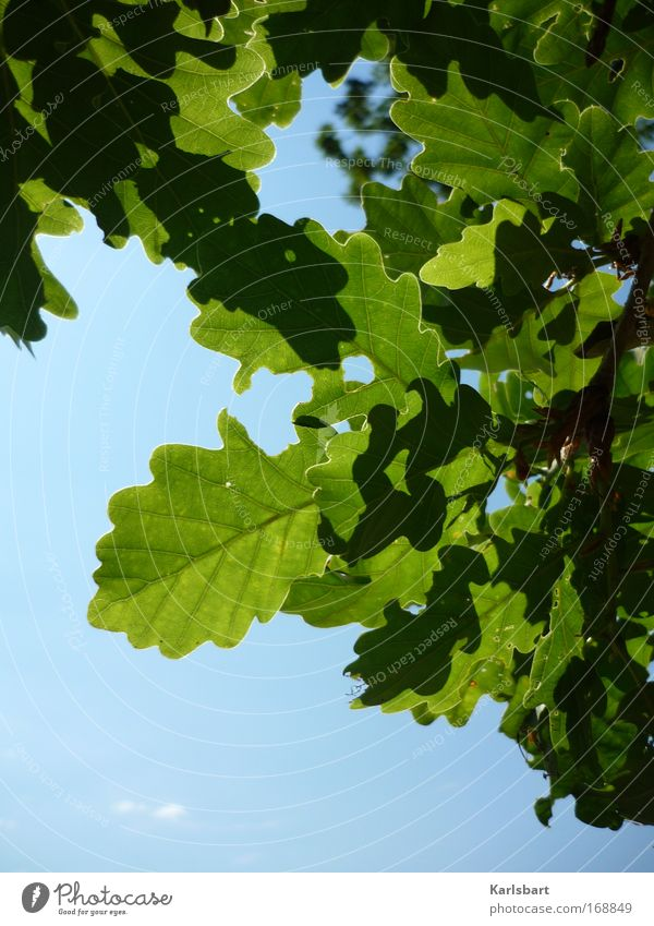 Sky Nature Green Beautiful Tree Summer Leaf Calm Relaxation Environment Life Movement Park Design Hope Idyll