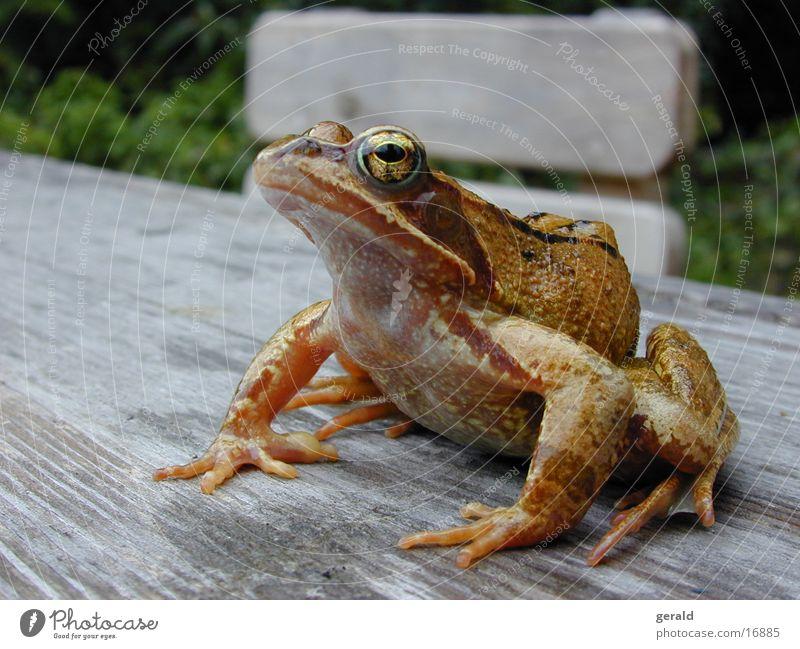 frog Tree frog Green Frog Eyes Garden