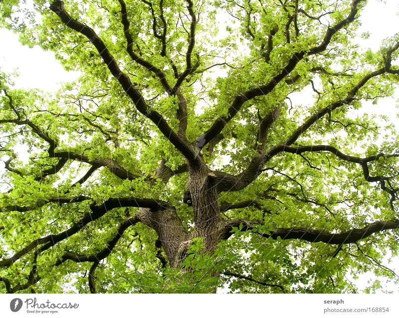 Biology Leaf Forest Wood Branch Botany Fairy tale Fantasy Branchage Verdant Labyrinth Branched Crust