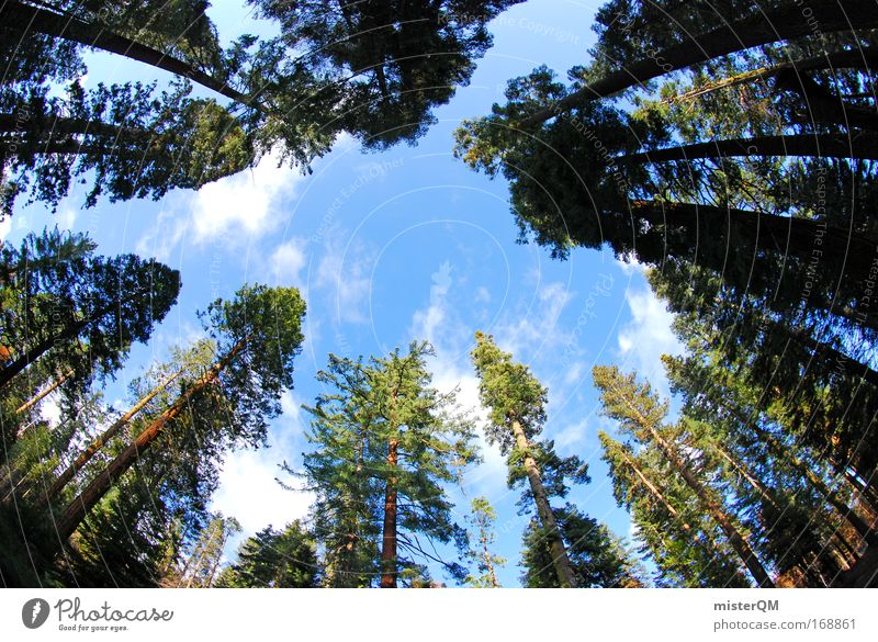 Sky Green Vacation & Travel Forest Life Wood Earth Large Horizon Tall Perspective Growth USA Break Vantage point Threat