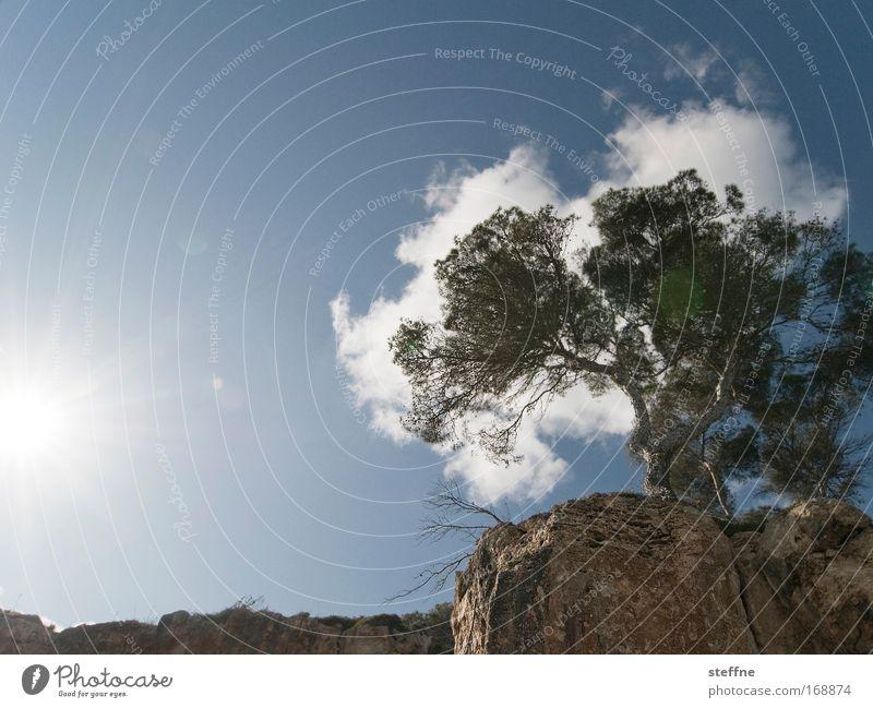 Nature Sky Tree Sun Ocean Summer Calm Clouds Spring Landscape Coast Rock Beautiful weather Cliff Camouflage Mediterranean sea