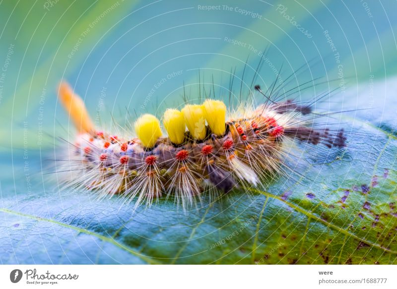 Nature Animal Fantastic Insect Pelt Creepy Butterfly Environmental protection Exotic Snake Habitat Moth Animal protection
