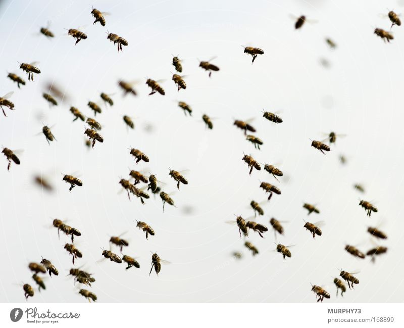 Sky Nature Animal Environment Movement Air Fear Flying Group of animals Wing Animal face Beautiful weather Fantastic Bee Fear of death Watchfulness