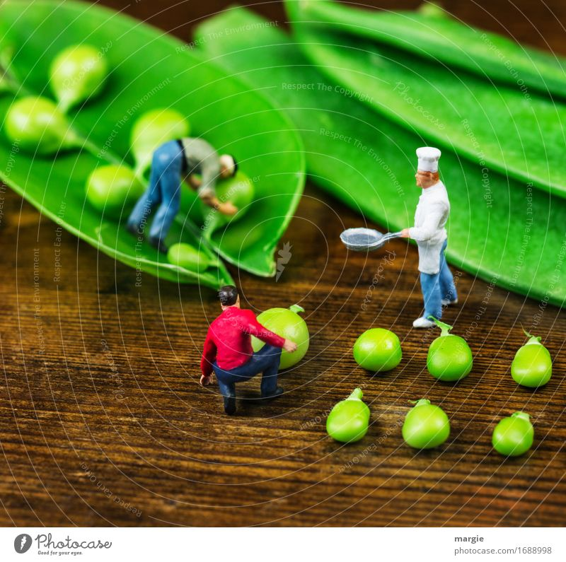 Miniwelten - Pea harvest Food Vegetable Nutrition Lunch Organic produce Vegetarian diet Pan Work and employment Profession Cook Workplace Kitchen Gastronomy