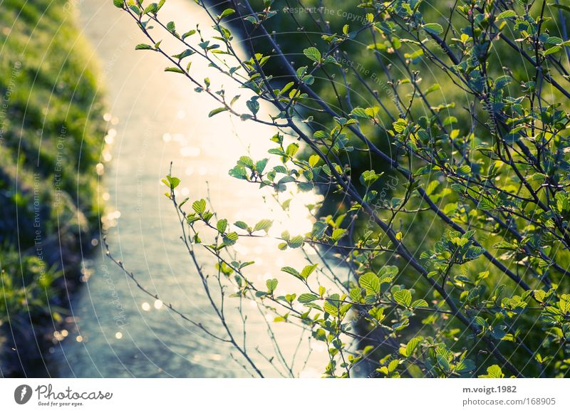 course of a river Colour photo Exterior shot Evening Reflection Sunlight Deep depth of field Nature Plant Spring Summer Tree Leaf Branch Ash-tree River bank