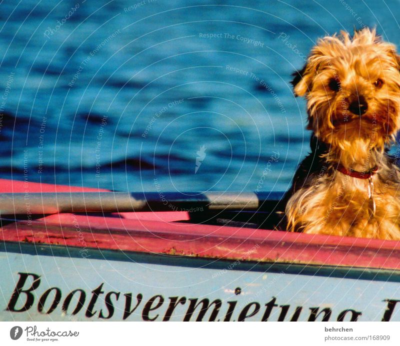 When I grow up, I'll be captain. Colour photo Exterior shot Contentment Summer Waves Water Beautiful weather Lake River Boating trip Rowboat Watercraft Pelt Pet