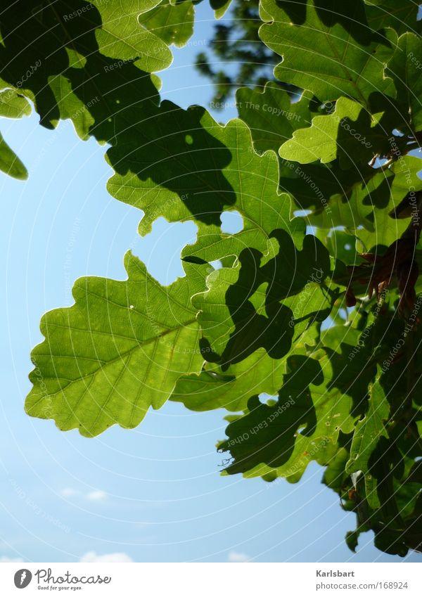 joseph. freiherr von eichendorff. Design Healthy Life Gardening Environment Nature Plant Sky Sunlight Beautiful weather Tree Leaf Oak tree Oak leaf Oak forest