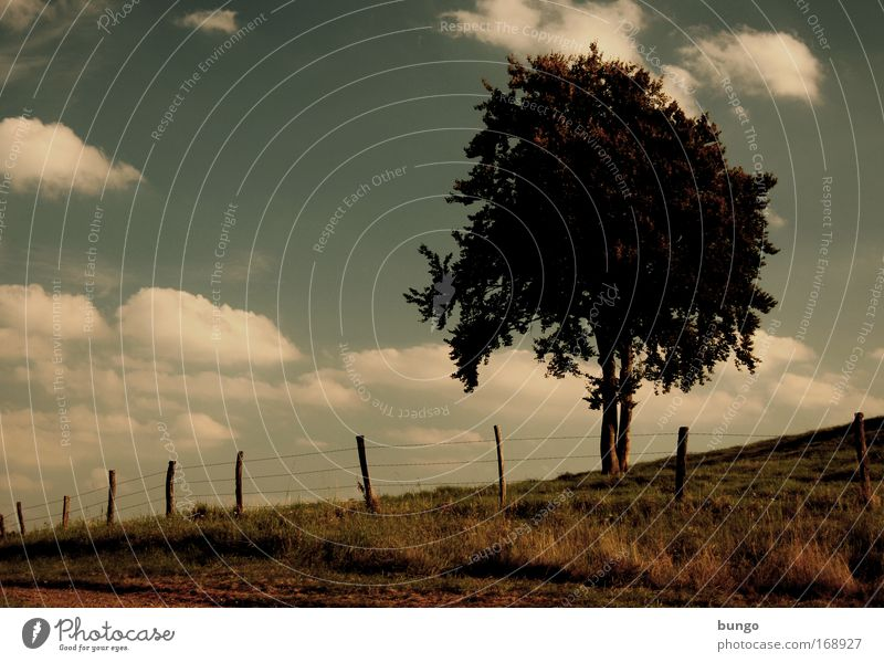 Nature Sky Tree Clouds Dark Meadow Lanes & trails Landscape Environment Growth Hill Fence Fence post