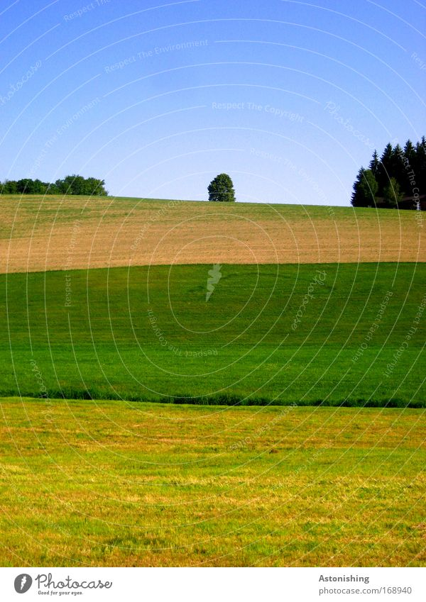 streaked Environment Nature Landscape Sky Summer Beautiful weather Plant Tree Grass Meadow Field Forest Hill Growth Blue Brown Multicoloured Yellow Green Stripe