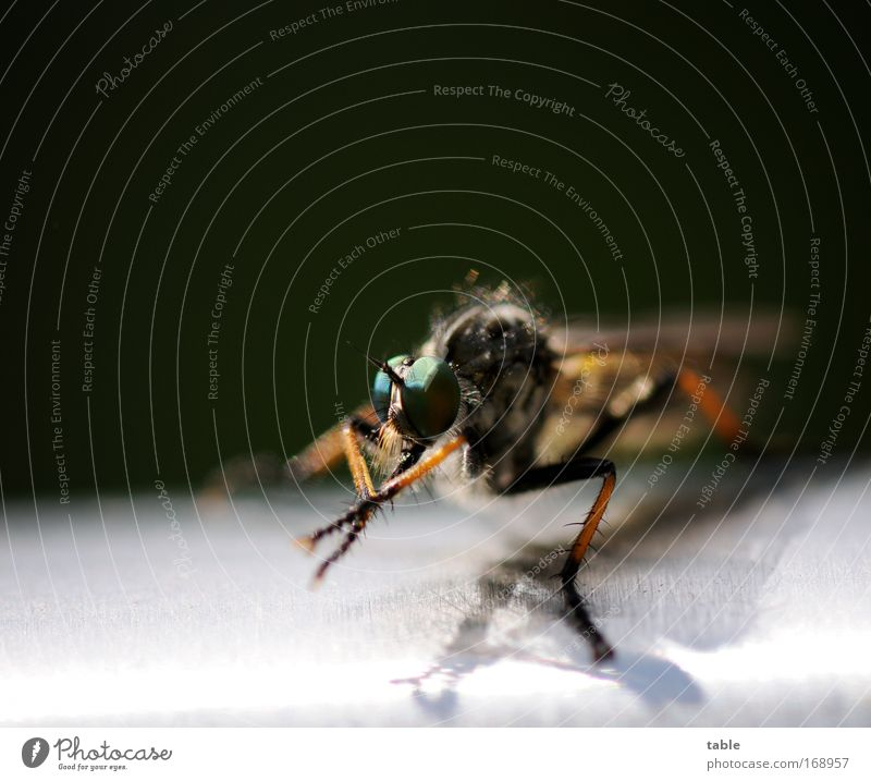 Nature Green Black Eyes Animal Dark Movement Freedom Brown Glittering Small Fly Flying Insect Observe Natural