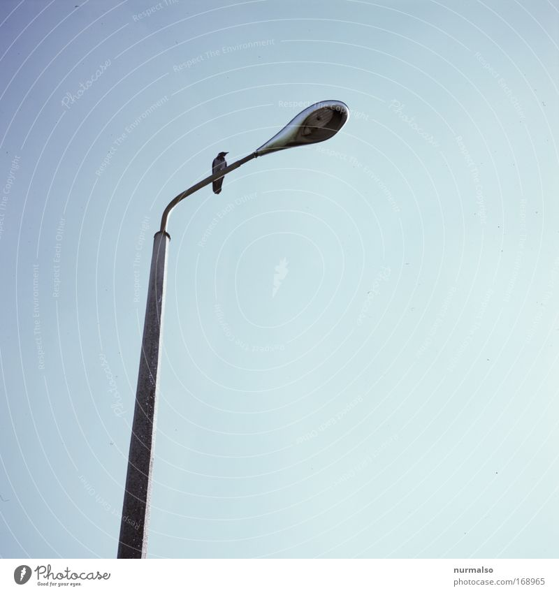Sky Blue Plant Summer Black Animal Far-off places Street Environment Lamp Bird Sit Flying Esthetic Wild animal Observe