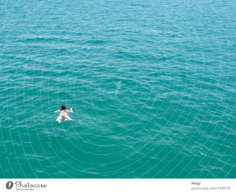 free-swimmer Colour photo Exterior shot Aerial photograph Copy Space right Copy Space top Copy Space bottom Day Sunlight Bird's-eye view Swimming & Bathing