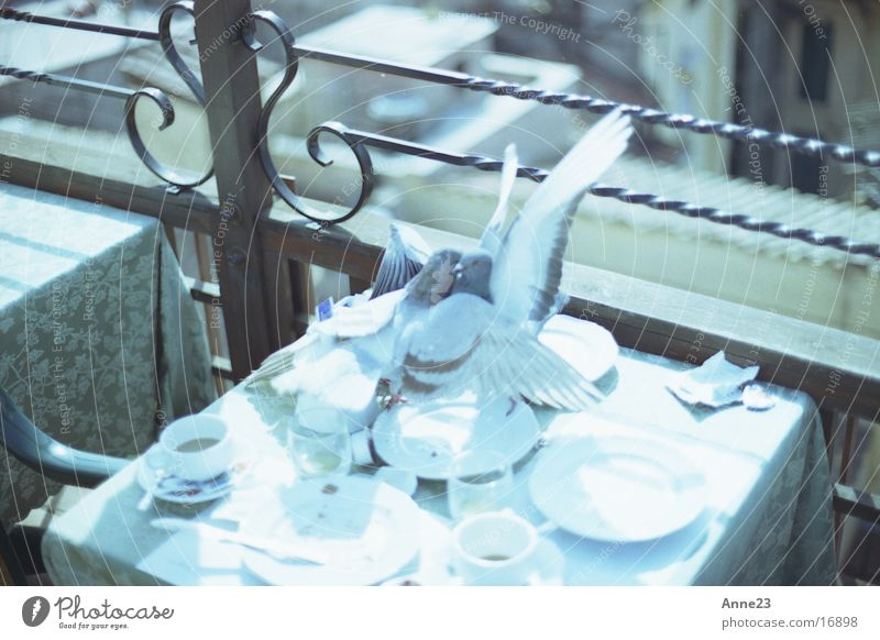 Love Transport Table Italy Pigeon Rome Embrace