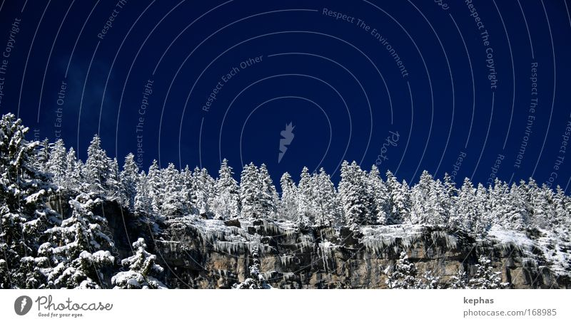 magic forest Colour photo Exterior shot Deserted Copy Space top Day Landscape Sky Cloudless sky Winter Beautiful weather Ice Frost Snow Tree Forest Rock Alps