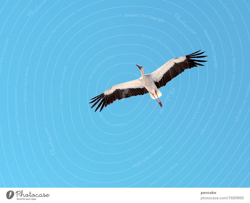 Sky Nature Animal Flying Bird Wild animal Baby Observe Beautiful weather Sign Elements Symbols and metaphors Cloudless sky Testing & Control Blue sky Birth