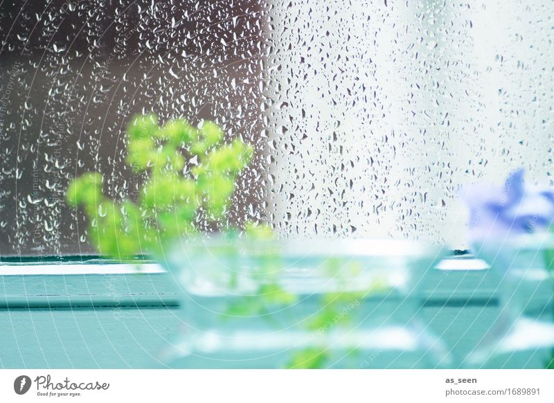 summer rain Harmonious Calm Nature Water Drops of water Spring Summer Weather Rain Flower Window Decoration Vase Glass Glittering Wait Esthetic Bright