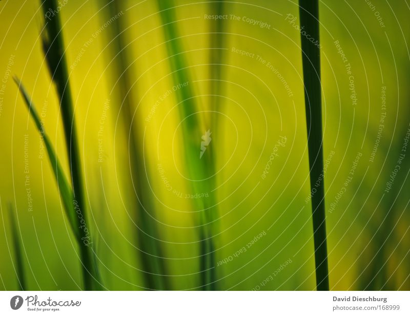 Nature Green Beautiful Plant Black Yellow Environment Grass Line Growth Blade of grass Section of image Vertical Partially visible Foliage plant Wild plant