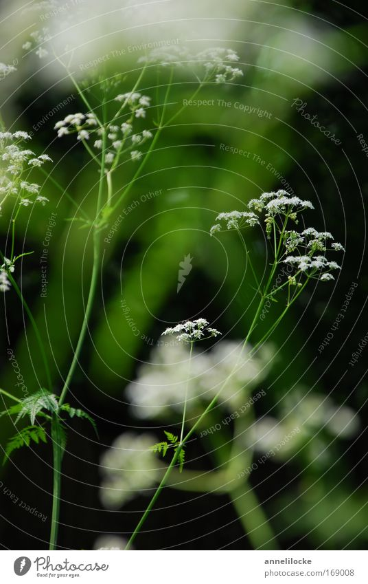 Nature White Green Beautiful Plant Summer Flower Meadow Spring Blossom Park Field Wild Esthetic Delicate Delicate