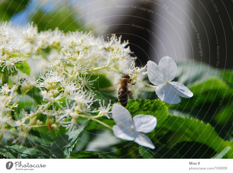 with bees and flowers. Colour photo Exterior shot Close-up Macro (Extreme close-up) Deserted Nature Plant Spring Summer Flower Blossom Meadow Animal Bee 1