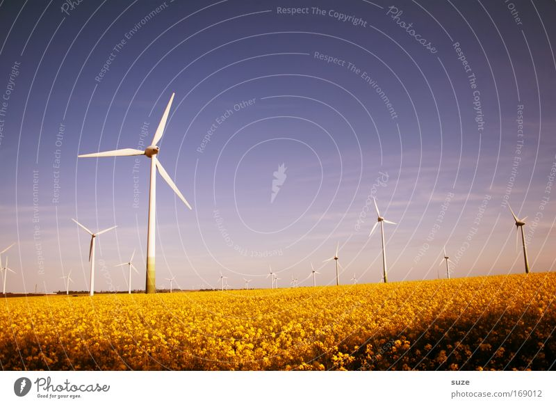 summer wind Colour photo Multicoloured Exterior shot Deserted Day Economy Industry Energy industry SME Renewable energy Wind energy plant Energy crisis