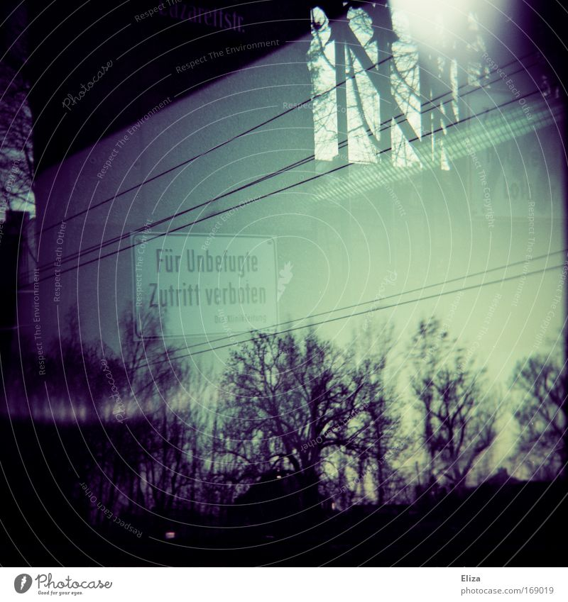 Sky Forest Dark Window Signs and labeling Transience Signage Electricity Holga Bans Transmission lines Eerie High voltage power line Shaft of light Warning sign No admittance