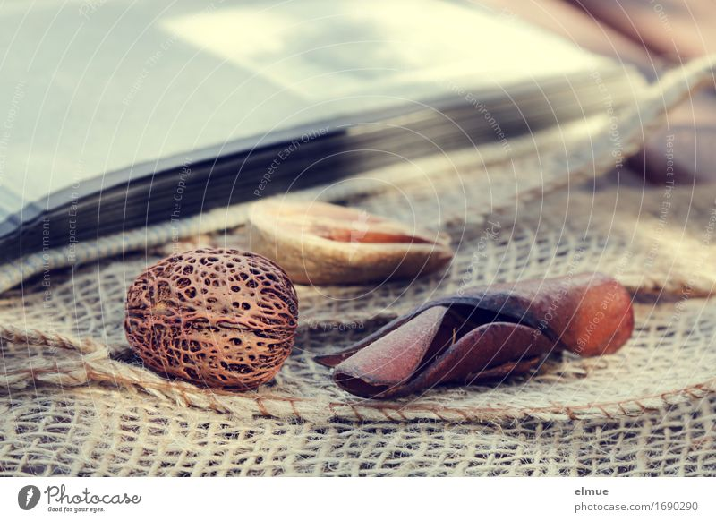 transience Photo album Nut Seed Woven Handcrafts Net Lie Exotic Uniqueness Romance Sadness Esthetic Design Discover Leisure and hobbies Mysterious Art Network