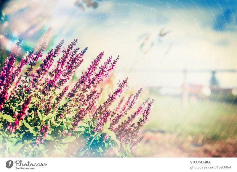 Sky Nature Plant Summer Flower Landscape Environment Blossom Autumn Meadow Grass Lifestyle Healthy Garden Design Park