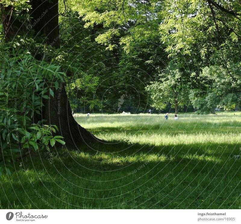 tree Tree Meadow Green Park