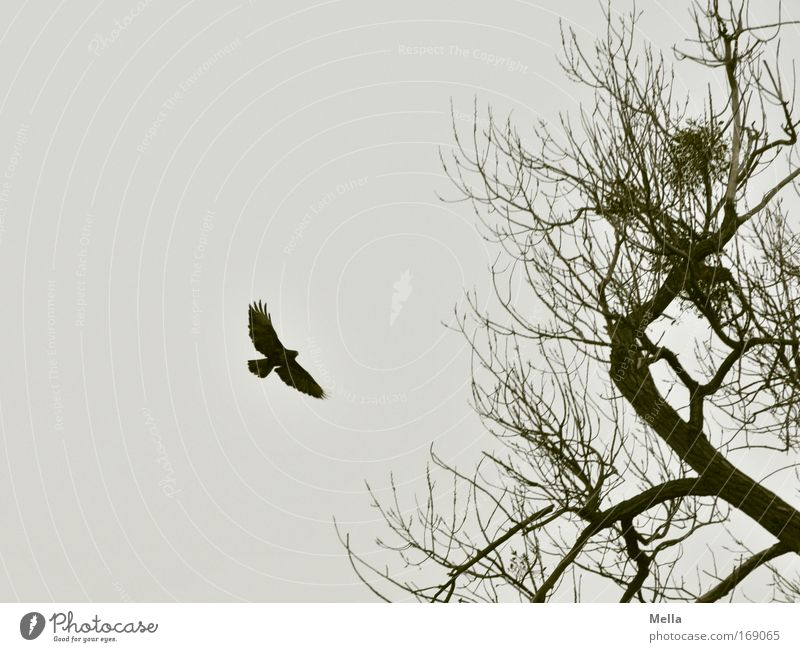 Nature Sky Tree Plant Winter Calm Loneliness Animal Dark Autumn Freedom Gray Sadness Bird Environment Flying