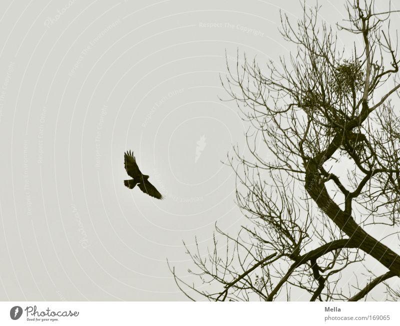 Nature Sky Tree Plant Winter Calm Loneliness Animal Dark Autumn Freedom Gray Sadness Bird Environment Flying