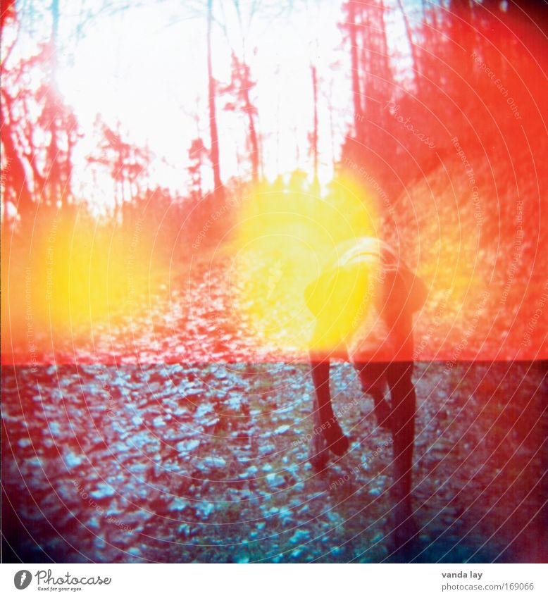 Animal Colour Dog Exceptional Intoxicant Patch Holga Pet Nightmare LSD Photographic technology Drugs rush Colour noise