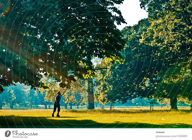 Human being Man Nature Green Tree Sun Summer Joy Calm Adults Yellow Relaxation Landscape Life Warmth Grass