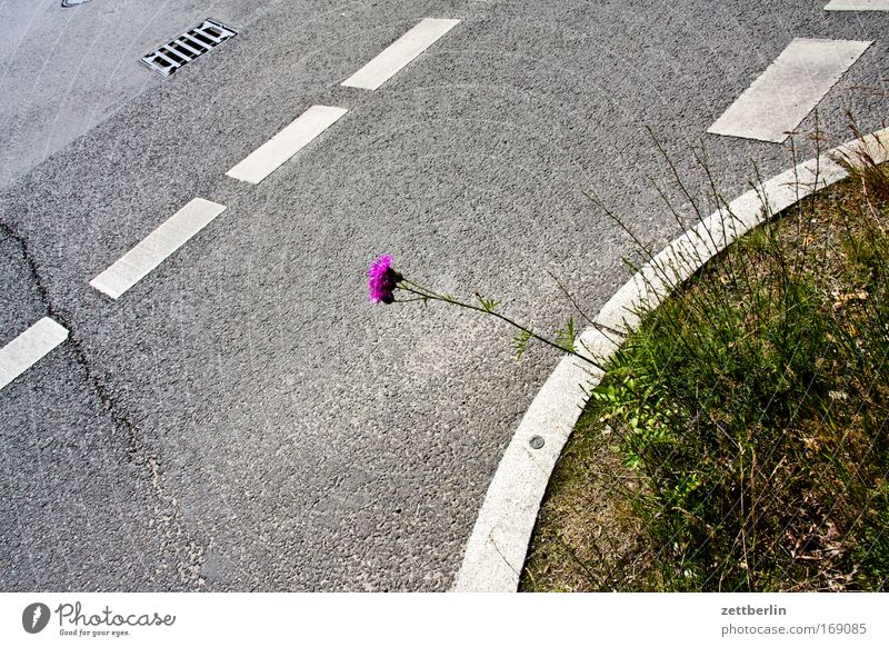Plant Summer Street Blossom Sadness Road traffic Transport Growth Transience Signage Distress Traffic infrastructure Concern Crossroads Fear of the future Road sign