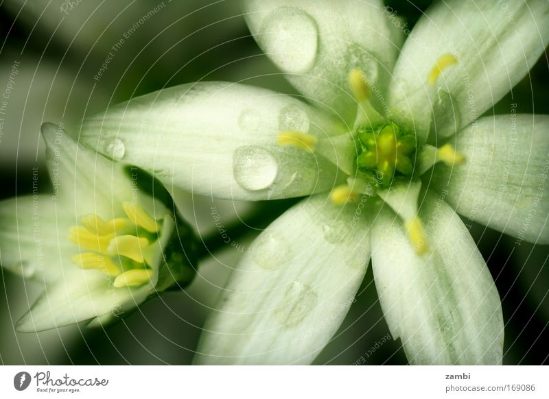 Nature Beautiful White Green Animal Blossom Spring Dream Park Rain Contentment Wet Trip Fresh New