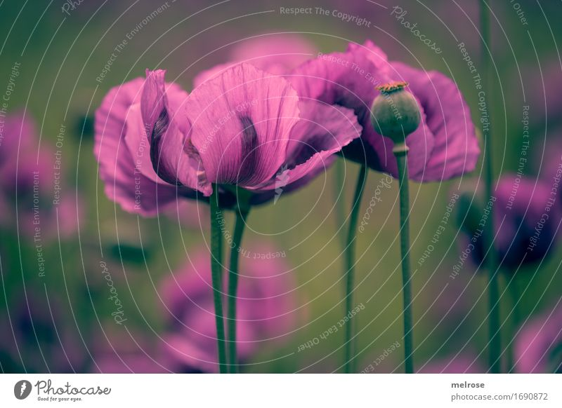 Nature City Plant Colour Summer Beautiful Green Flower Relaxation Leaf Blossom Style Exceptional Together Pink Field
