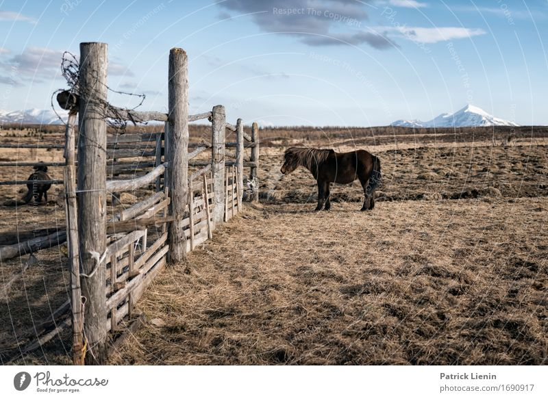 Horse in Iceland Nature Vacation & Travel Landscape Relaxation Animal Mountain Environment Life Meadow Earth Horizon Weather Field Elegant Island Uniqueness
