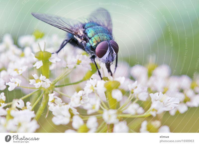 Nature Plant Summer White Flower Animal Blossom Meadow Small Art Design Park Glittering Fly Esthetic Crazy