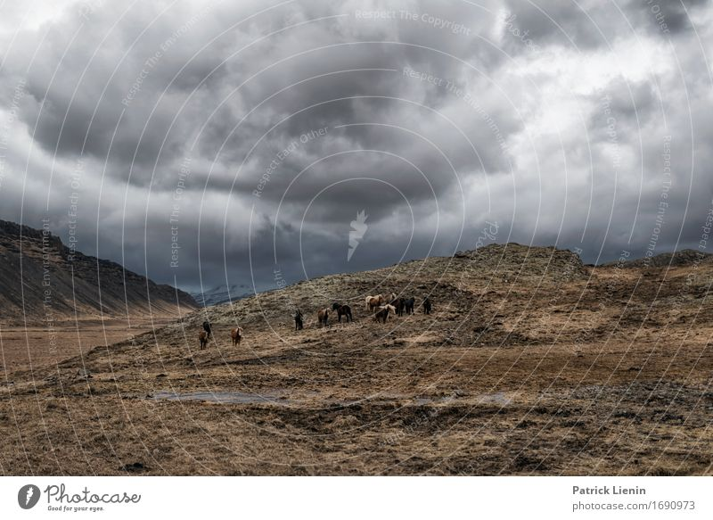 Wetterschutz Sky Nature Vacation & Travel Landscape Clouds Animal Mountain Environment Life Grass Earth Weather Field Air Earth Wind