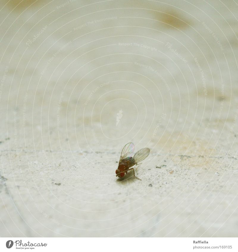 I hate you and your friends. Colour photo Interior shot Deserted Animal portrait Dead animal Wing Fruit fly 1 Flying Annoy