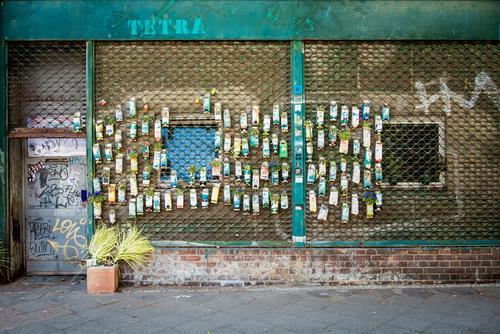 City Plant Flower Wall (building) Grass Berlin Wall (barrier) Gardening Pot plant Improvise