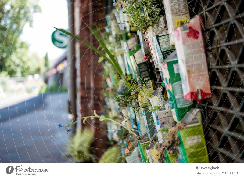 Urban Gardening II Plant Flower Foliage plant Berlin Wall (barrier) Wall (building) Hip & trendy Town Nature tetrapak beverage carton Pot plant Improvise