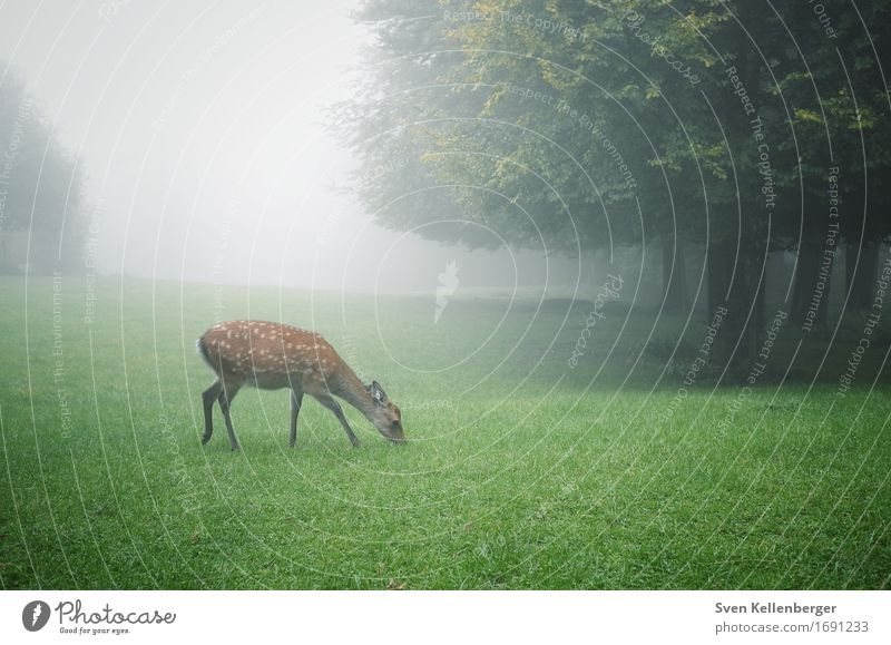 rest Nature Landscape Fog Tree Grass Meadow Forest Animal Wild animal Roe deer 1 Brown Gray Green Safety (feeling of) Peaceful Calm Colour photo Exterior shot