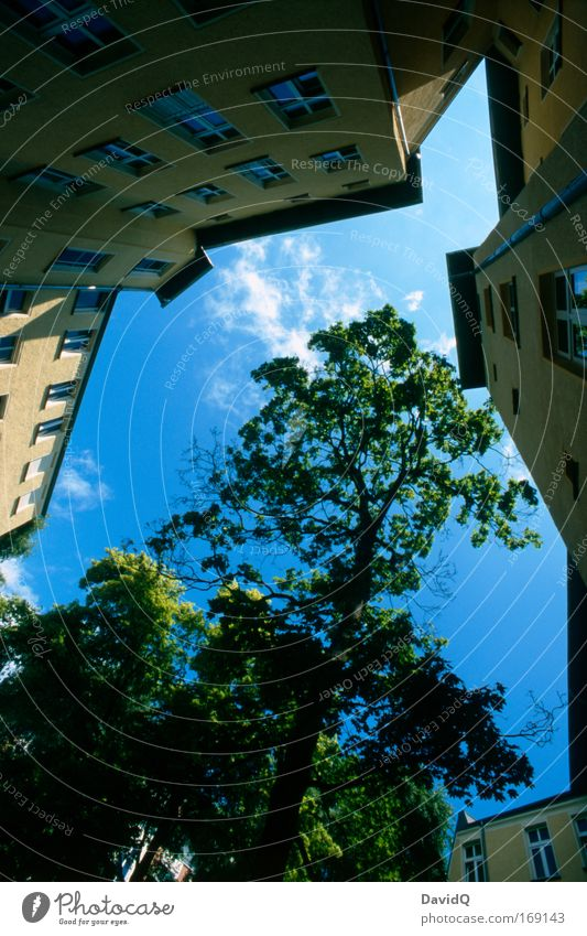 limited habitat Colour photo Exterior shot Deserted Day Light Contrast Wide angle Nature Sky Clouds Plant Tree Town House (Residential Structure) Building