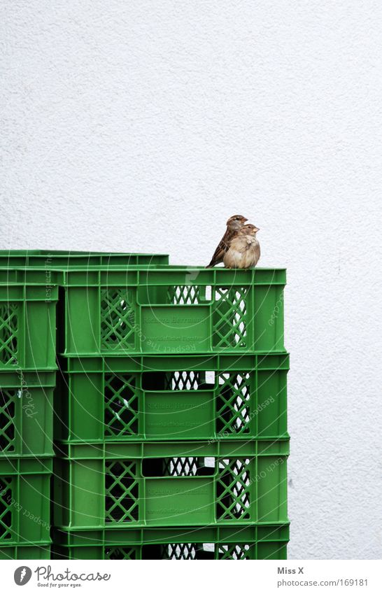 Mommy, I'm scared. Colour photo Exterior shot Animal portrait Bird 2 Baby animal Animal family Fear Sparrow Crate Sit Observe Pair of animals In pairs Day