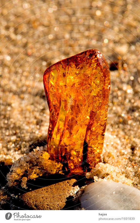 Amber at the Baltic Sea beach Alternative medicine Medication Beach Sand Stone Old Illuminate Yellow find Resin Brilliant Precious stone semi-precious stone