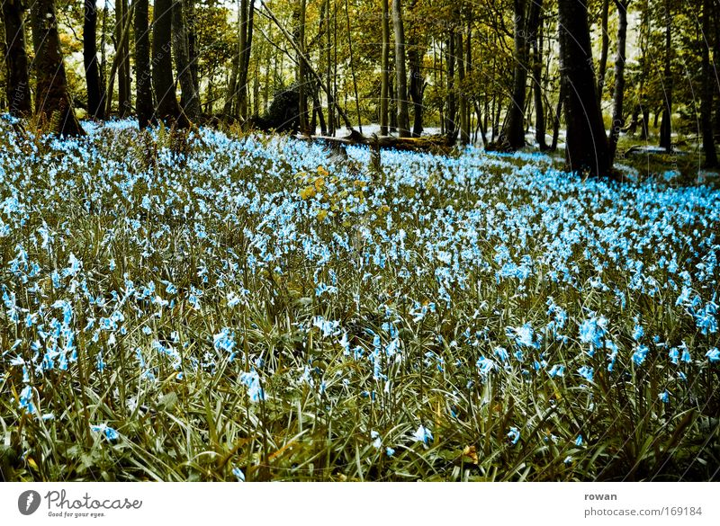 Beautiful Tree Flower Blue Forest Meadow Blossom Grass Spring Landscape Growth Romance Bushes Blossoming Fragrance Clearing