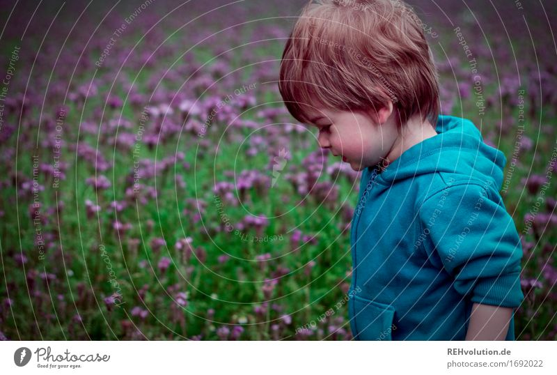 Toddler in front of a flower field Human being Child Boy (child) Infancy 1 1 - 3 years Environment Nature Landscape Flower Blossom Field Sweater Movement Going