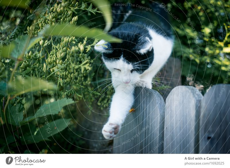 I'll be right with you. Animal Pet Cat Paw 1 Catch Hunting Playing natural instinct Instinct Behavior Colour photo Exterior shot Experimental Deserted